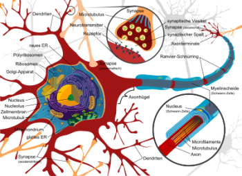 400px-complete_neuron_cell_diagram_de-svg_